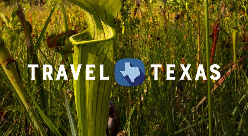 Let's Texas